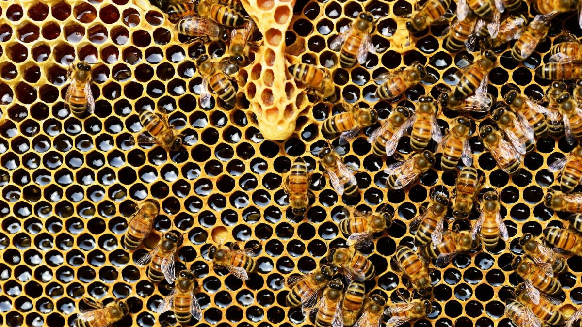 Bee Sting Allergy